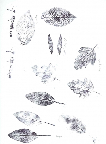 http://isabellefrancis.be/files/gimgs/th-23_feuilles_vignette.jpg